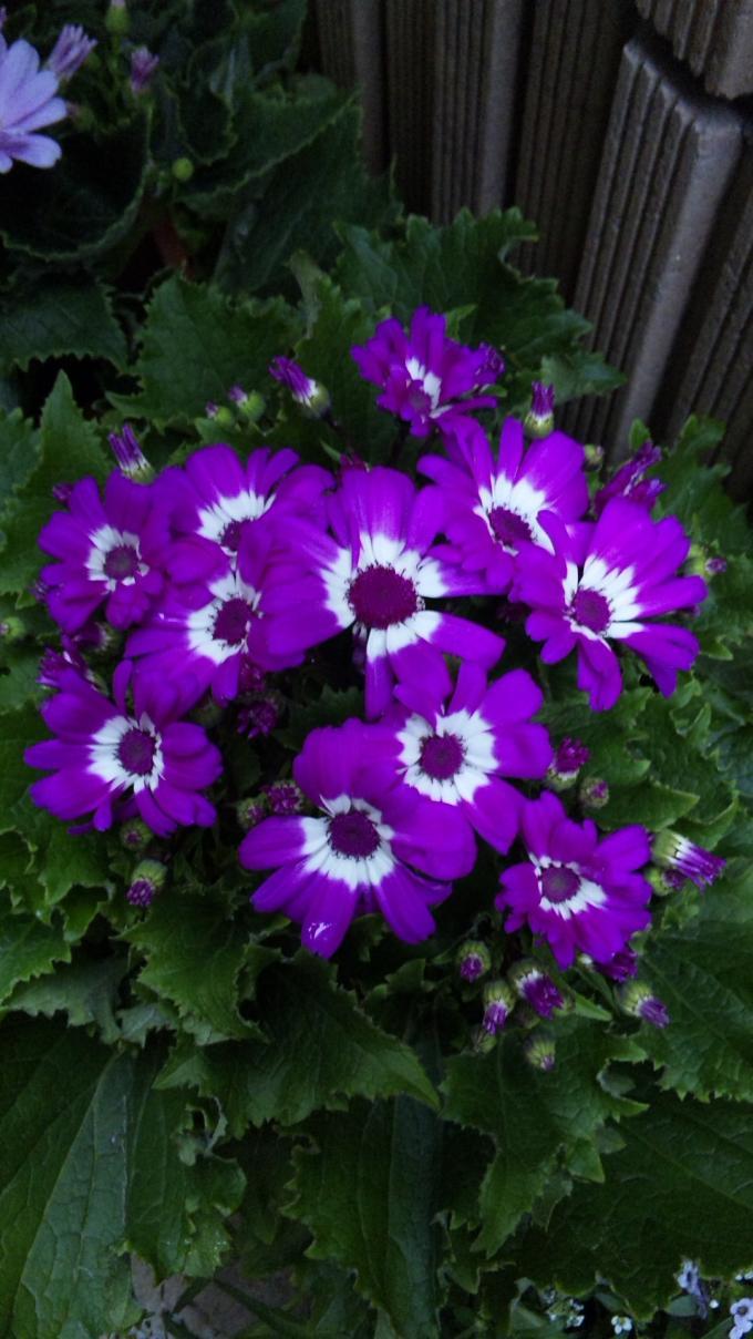 Flowers_20111208