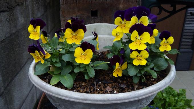 Flowers_20111209