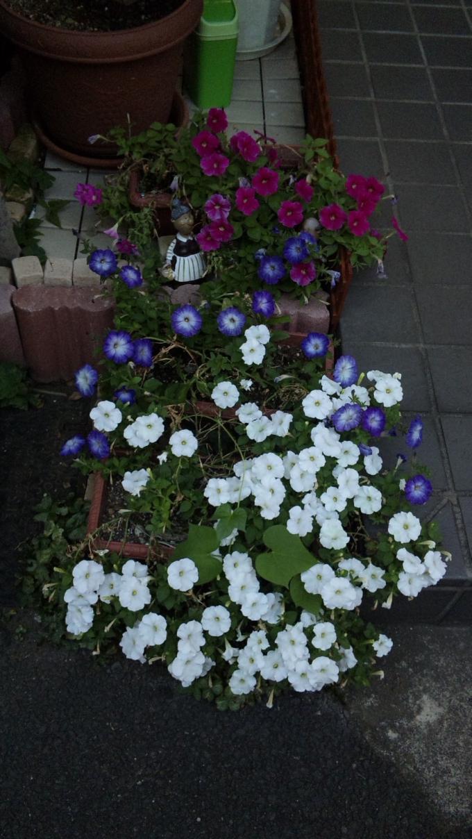 Flowers_20110715