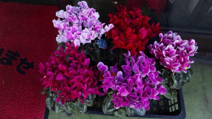 Flowers_20111212