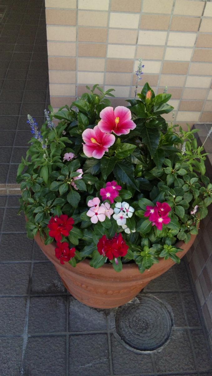 Flowers_20110718