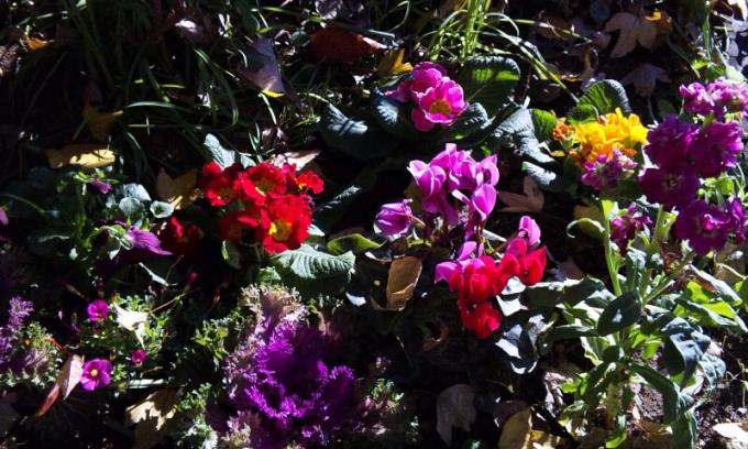 Flowers_20111213