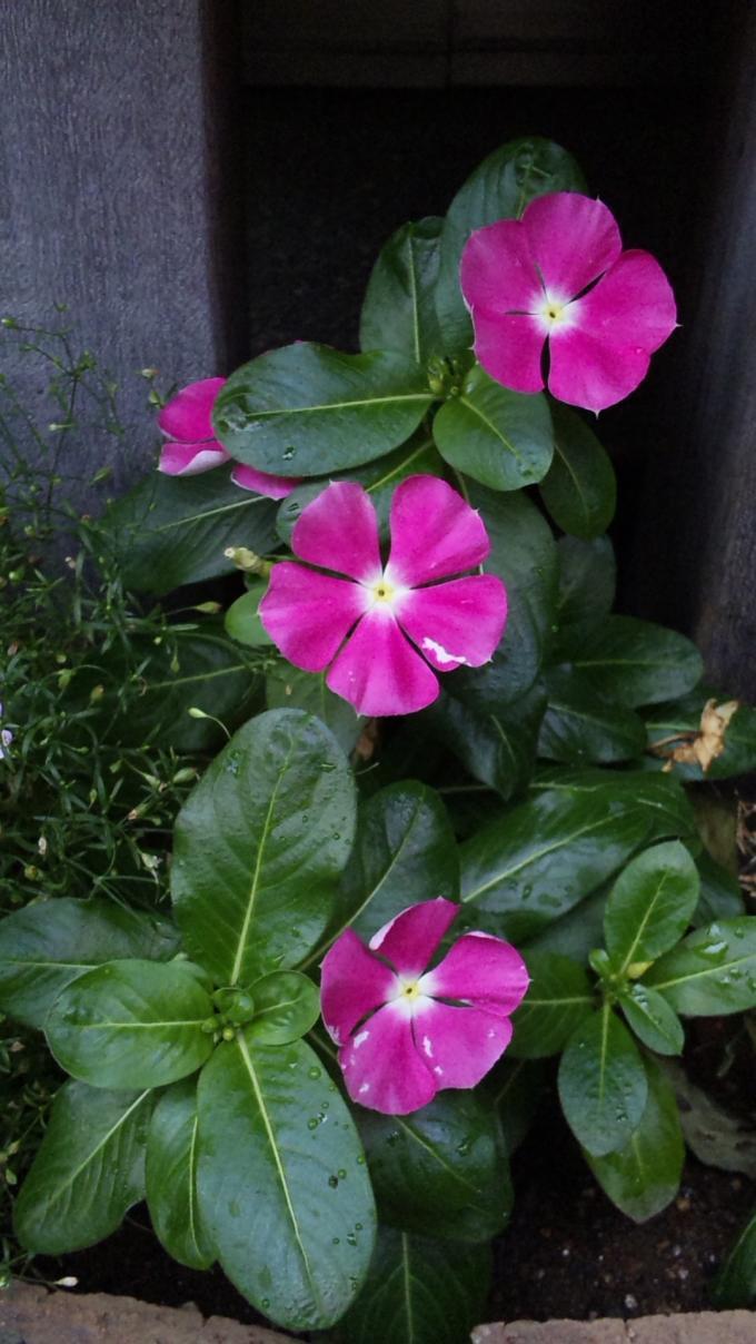 Flowers_20110720