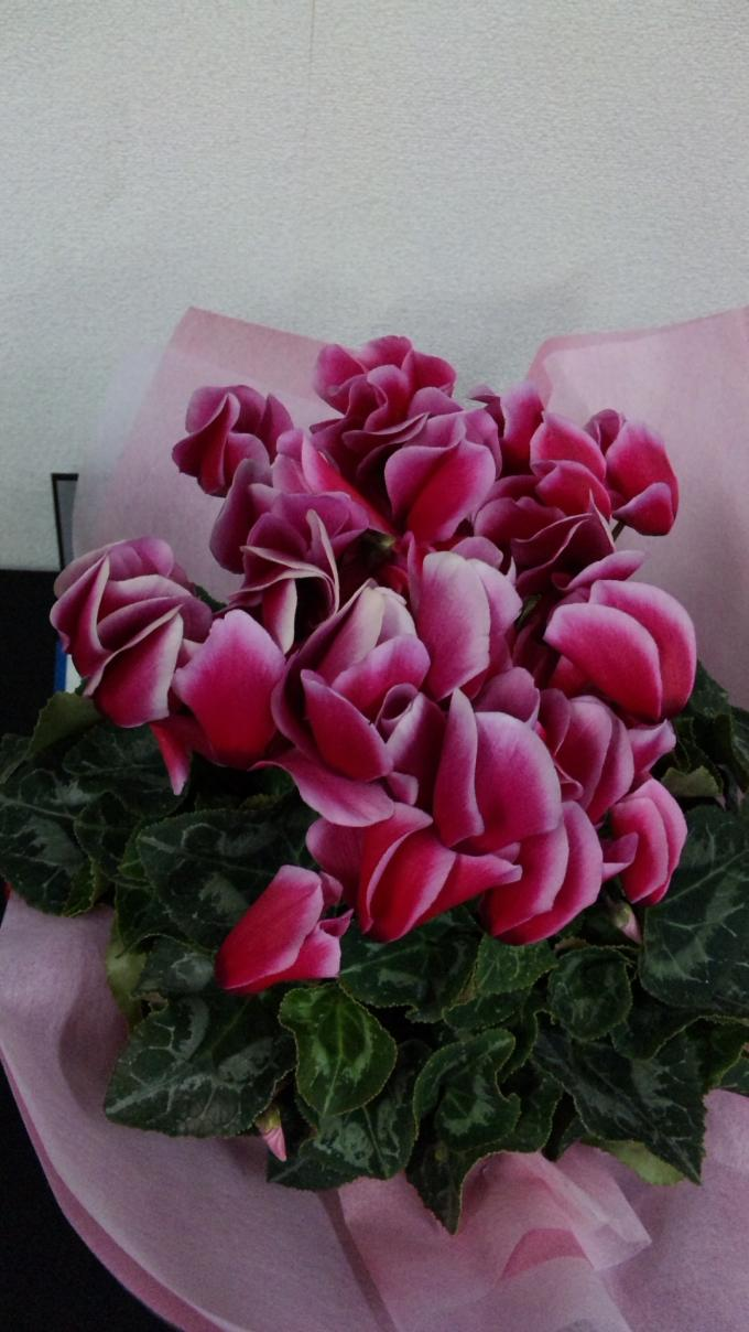 Flowers_20111216