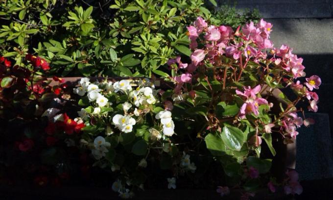 Flowers_20110628