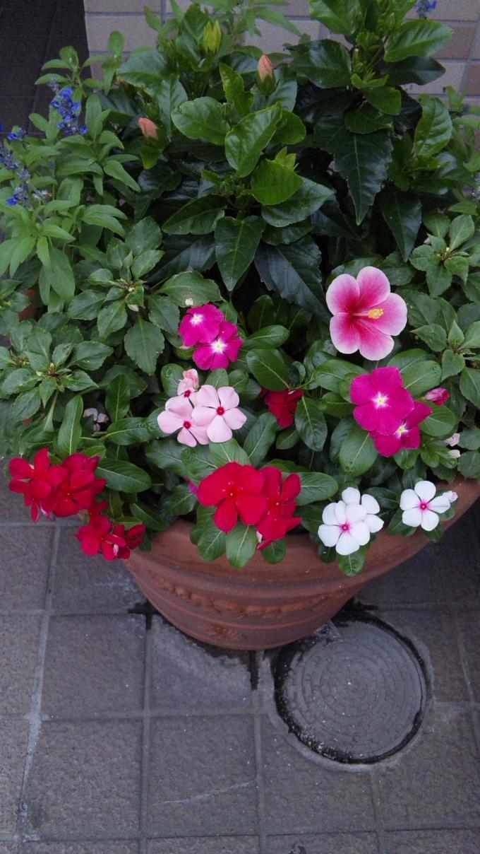Flowers_20110721