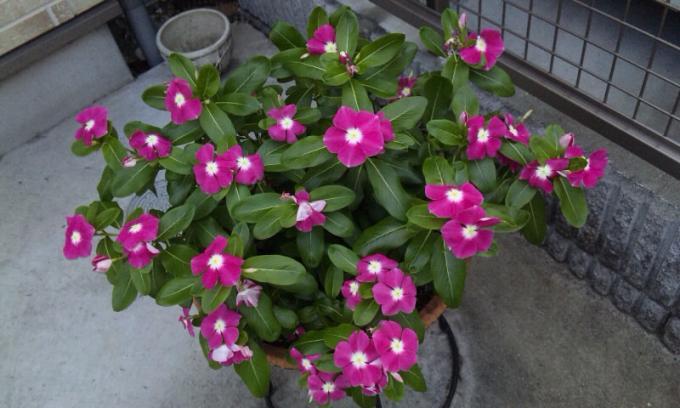 Flowers_20110723