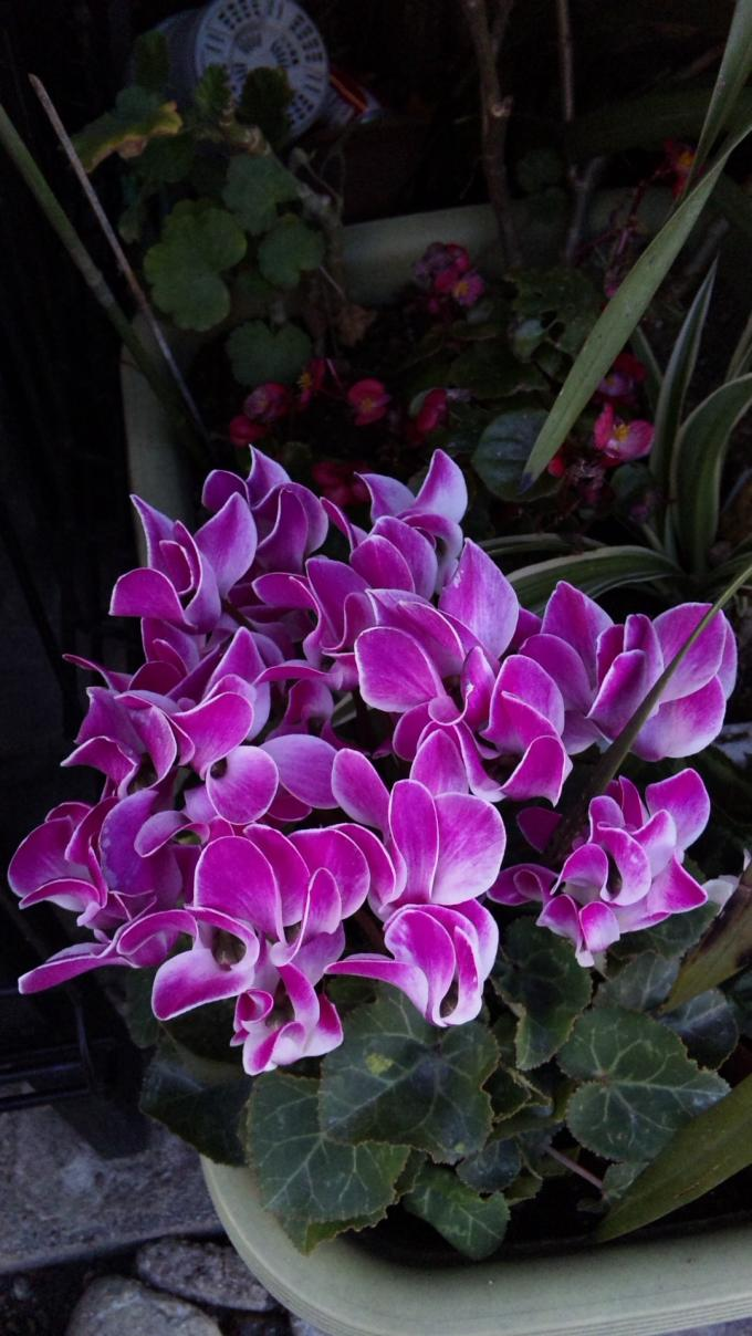 Flowers_20111219
