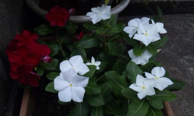 Flowers_20110726