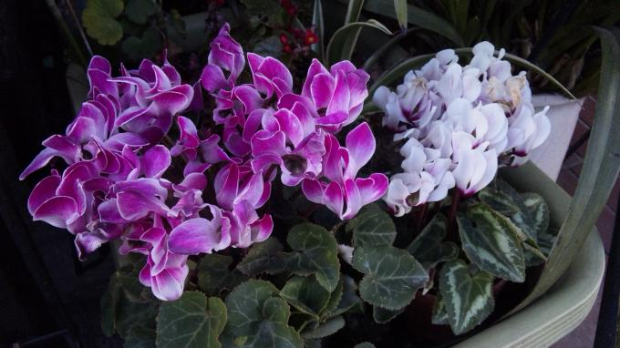 Flowers_20111230