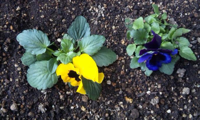 Flowers_20111231
