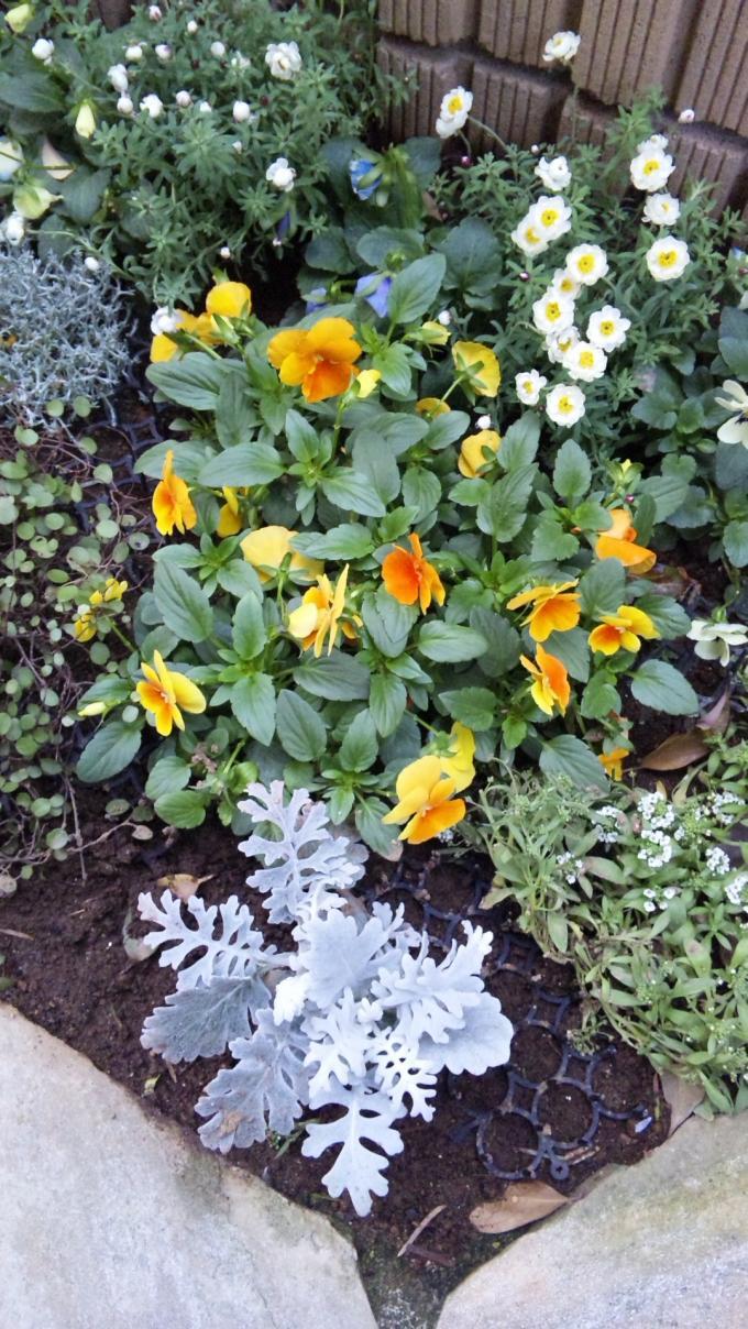 Flowers_20120102