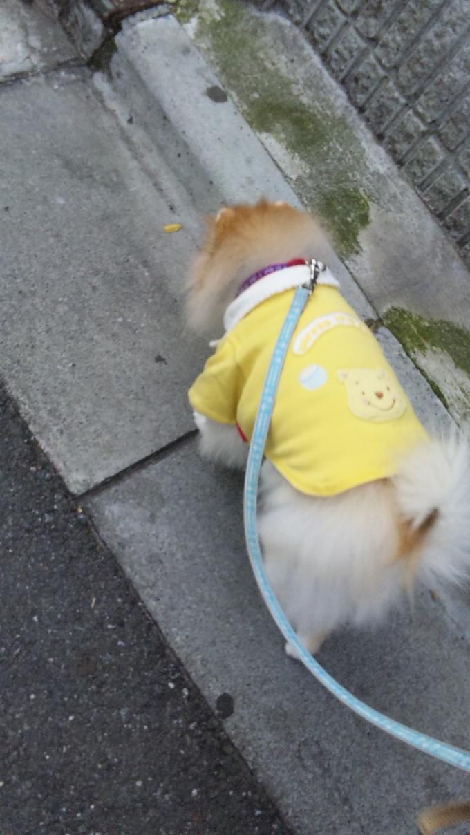 KYUJIRO_20111117