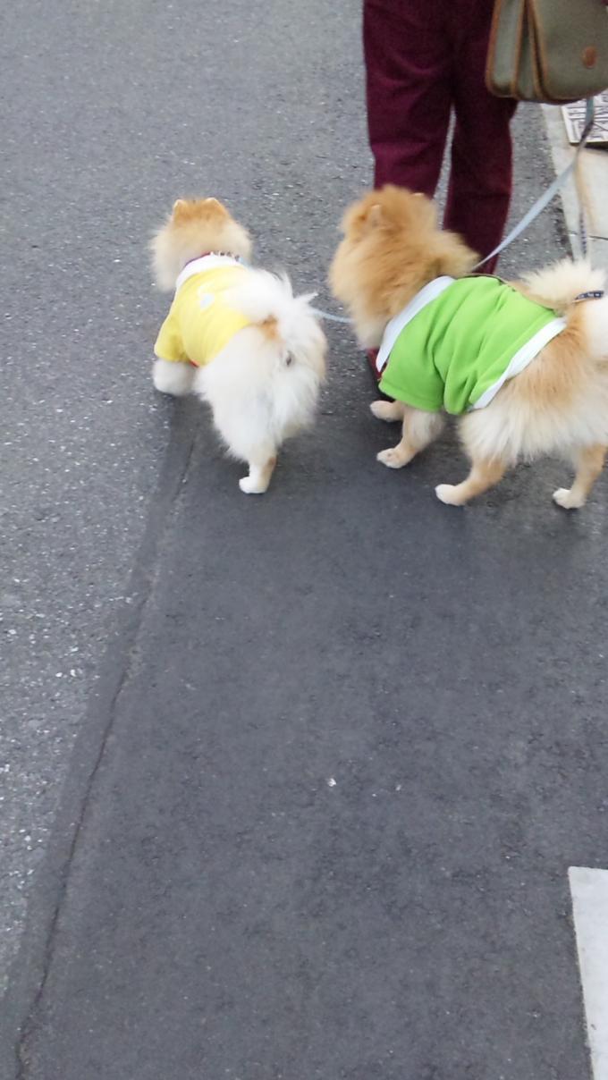 KYUJIRO & KYUZABURO_20111117