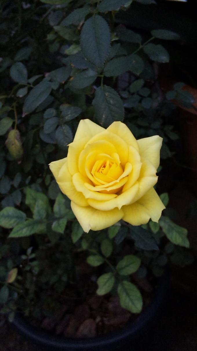 ROSE_20111218