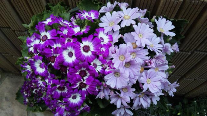 Flowers_20120101