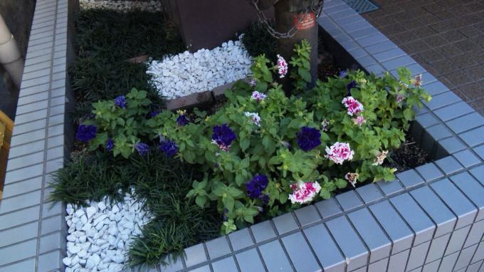 Flowers_20110714