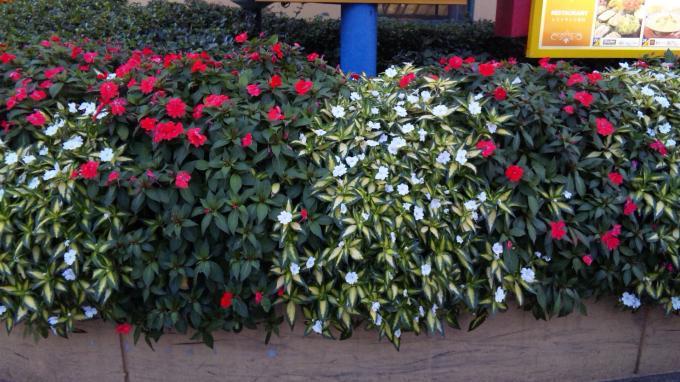 Flowers_20111117