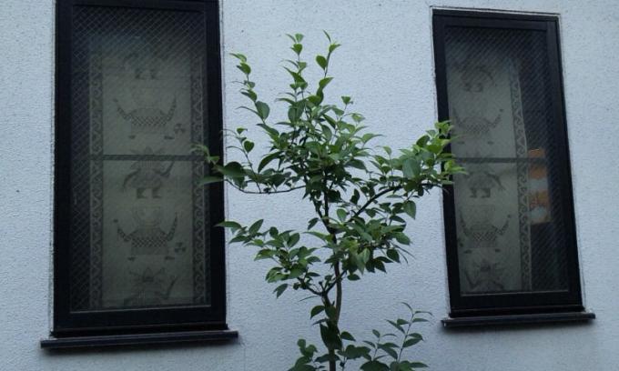 WINDOW_20110629