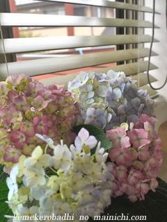flower2011-3.jpg