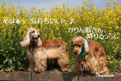 ブログ 4.2 ⑧IMG_5456