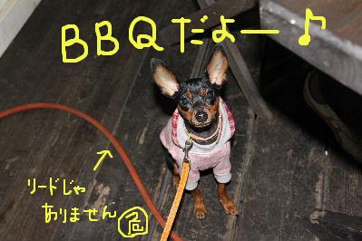 朝霧高原BBQ1