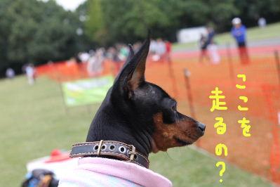 レース所沢1-4