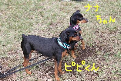 所沢レース2-7