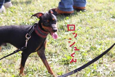 所沢レース2-9