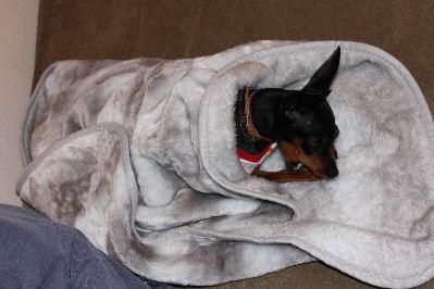 あったか毛布2