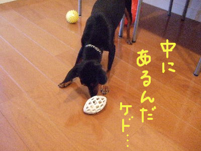 ラグビーボール2