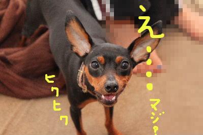 レース所沢1-2
