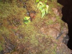 道案内のライトの近くに生えた苔