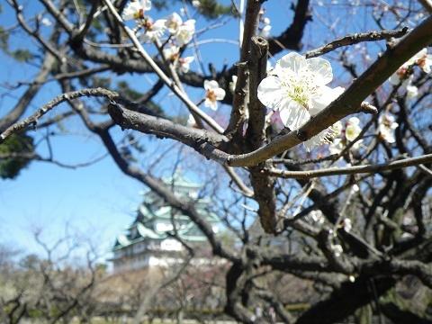 梅と名古屋城