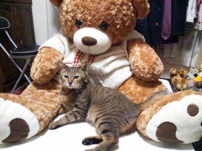 お嬢様は猫でいらっしゃいますか?