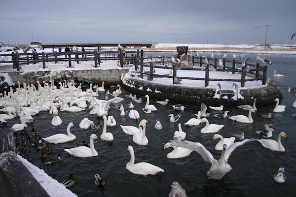 2005年(平成17年)の白鳥公園