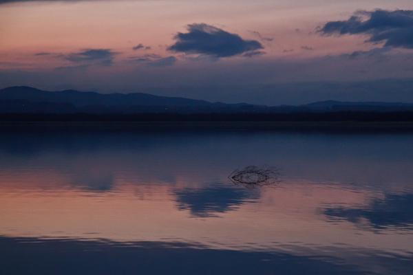 湖のマツゲ?