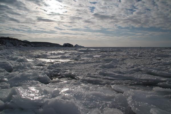知床は流氷が接岸していました