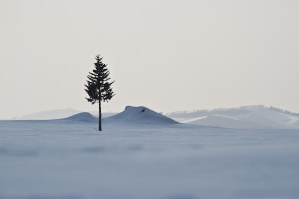 とある所の木