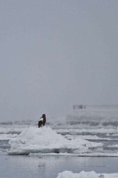 流氷の上で
