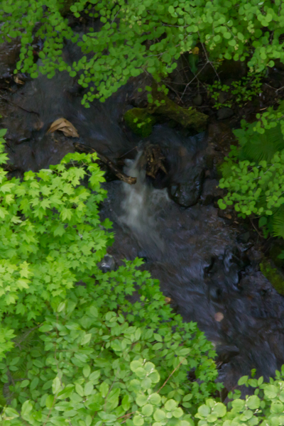 新緑の谷川