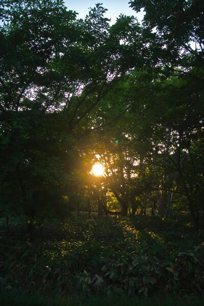 森に差す夕陽