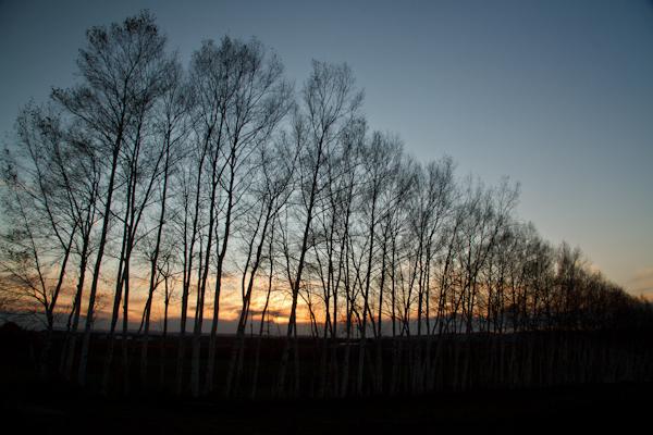 冬木立の夕暮れ