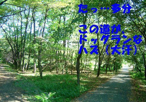 kanagawa 002