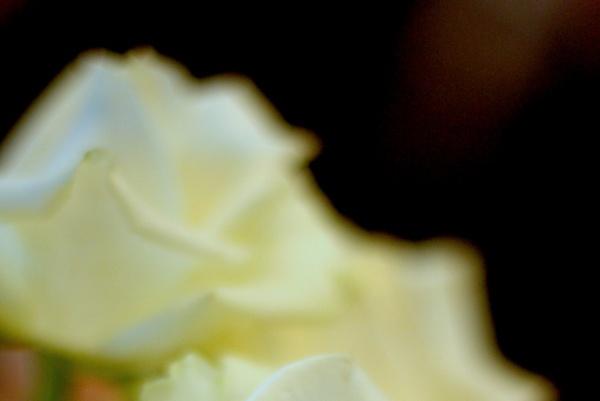 白い花1s