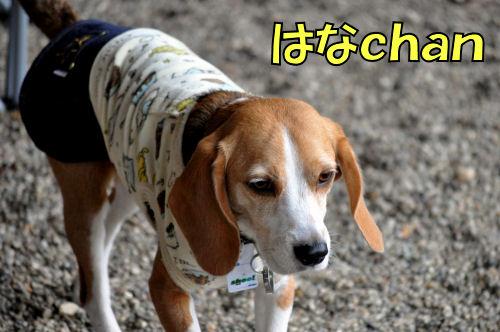 20120225はなchan