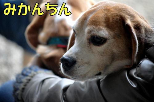 20120225みかんちん