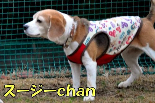 20120225スージーchan