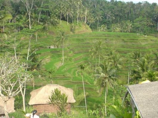 インドネシア 棚田