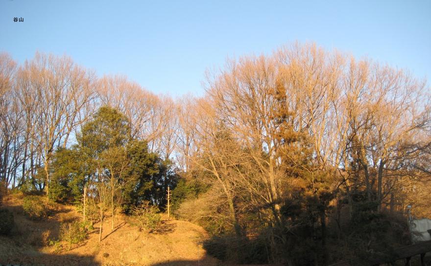 光がさしている木